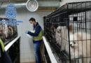 Rescatan a 270 perros a los que les habían cortado sus cuerdas vocales para que no ladraran