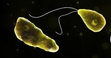 Niño muere tras infectarse con una ameba 'comecerebros' cuando nadaba en un lago