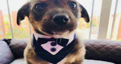 La historia de Vicente, el perrito que se quedó esperando a su adoptante