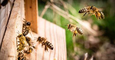 Advierten que radiación de celulares puede ser una de las causas de la «dramática disminución de insectos»