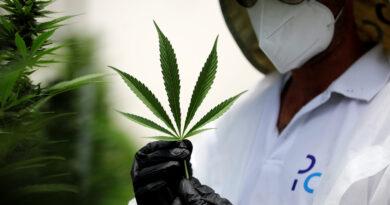 omisión de Estupefacientes de la ONU reconoce las propiedades terapéuticas del cannabis