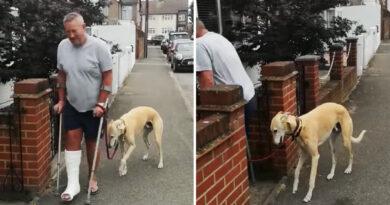 Gasta 400 dólares en hacer examinar la cojera de su perro, solo para descubrir que el can imitaba a su dueño