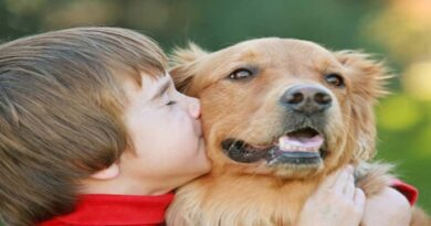 Estudio revela que los perros y niños tienen el mismo nivel de sensibilidad