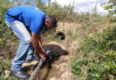 Hidrofalcón y MTA de San José II, Curiana y Trincheras recuperan suministro por tubería