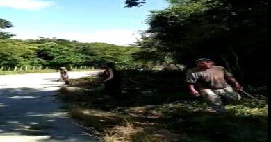 Se inicia los trabajos de corte y poda en la carretera Coro – Churuguara
