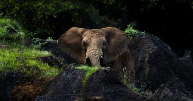 Elefante mata a un cuidador en un zoológico de España tras golpearlo con su trompa