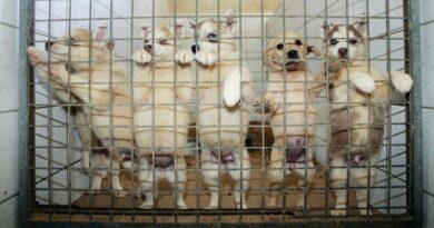 Algunos muertos por asfixia: el macabro hallazgo de cajas sorpresa con mascotas dentro en China