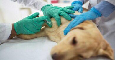 Solicitan a dueña de veterinaria que cobraba por atención de mascotas que ya habían muerto
