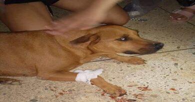 ¡Horror! Desatan cacería armada de perros en Judibana